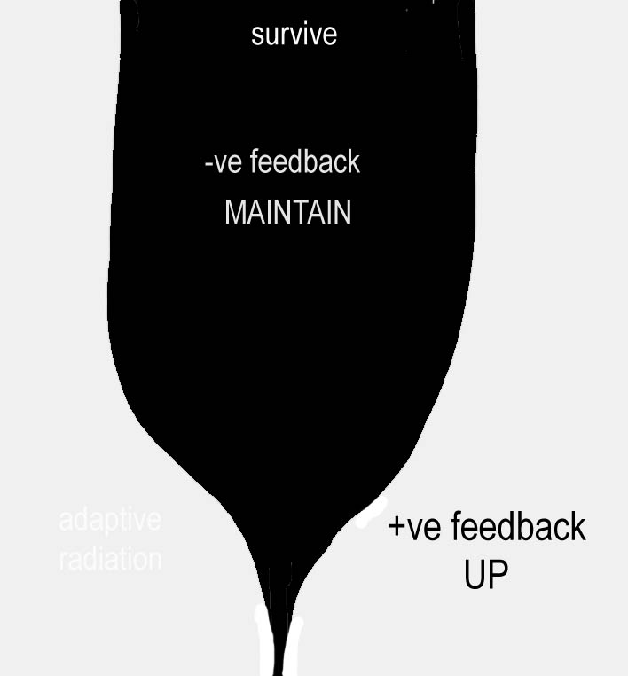 Adaptive Radiation Diagram Positive Feedback