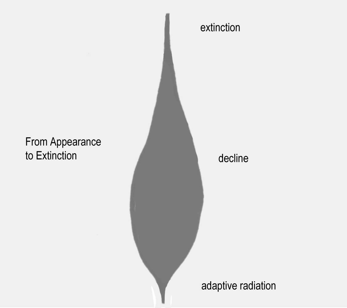 Adaptive Radiation Diagram From Appearance to Extinction