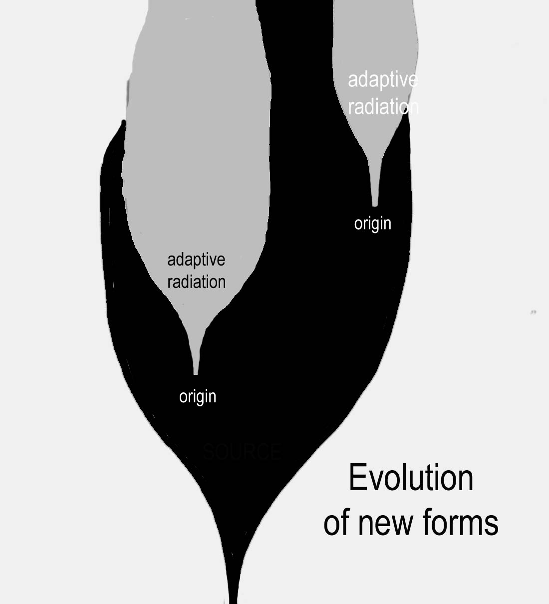 Adaptive Radiation Diagram - Evolution of New Forms